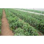 Plasa pentru plante 100M, Evotools